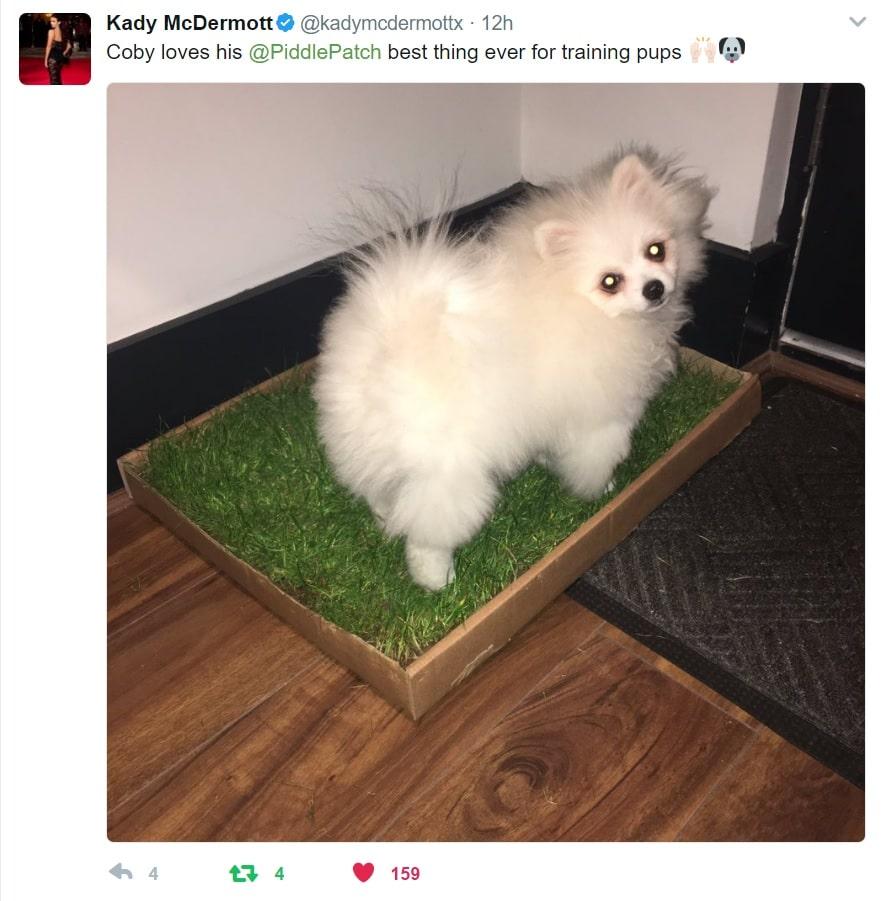 Pomeranian on Piddle Patch