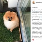 A Pomeranian stands on a fresh grass dog toilet