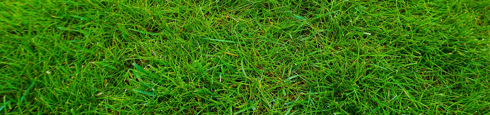 Our grass
