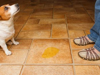 Does your dog pee somewhere they shouldn't?