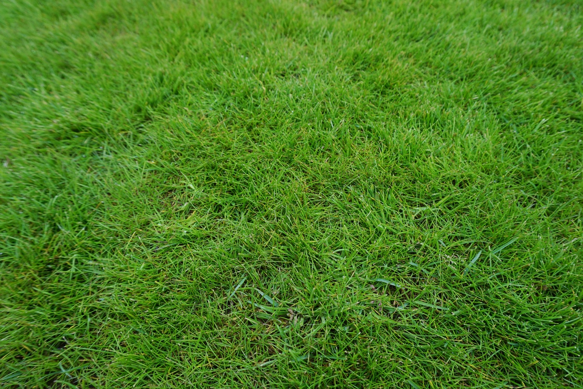 We grow our grass in the UK