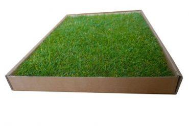 Fresh, soil-free, mess-free grass.
