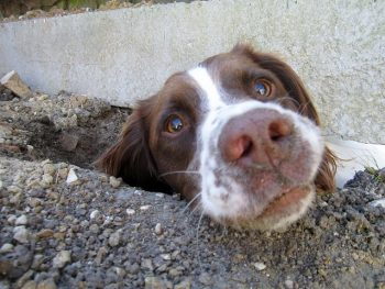How to stop your dog from digging.