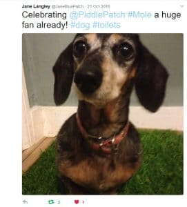 A screenshot from Twitter showing a dachshund on a real grass dog toilet.