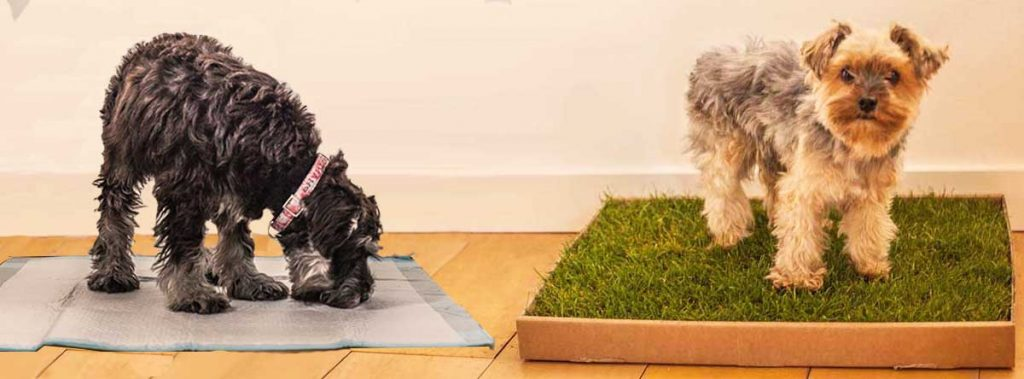 Would you rather a puppy pad or a fresh grass dog toilet?